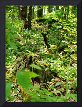 Mossy Stump in the Woods (Portrait)