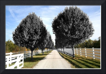 trees country lane
