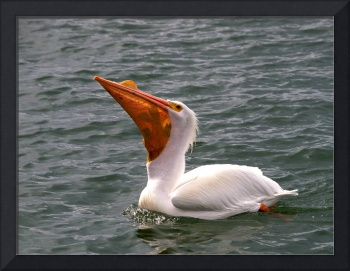 White Pelican and Lunch