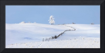 Parkland County, Alberta, Canada, A Tree And Fence