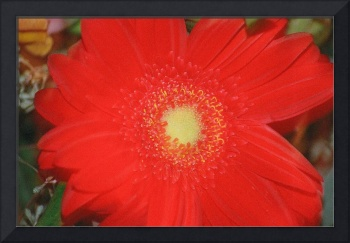 Red Flower, Botanical, Garden