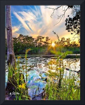 Swamp Sunset Yellow Flowers LilyPad Reflection Art
