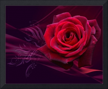 Bold Red Rose Of Love For Valentine's Day