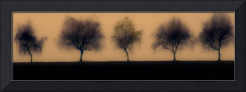 Five Willowy Trees