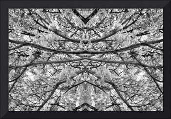 MIRRORED TREES, V.23, Edit C, in BW