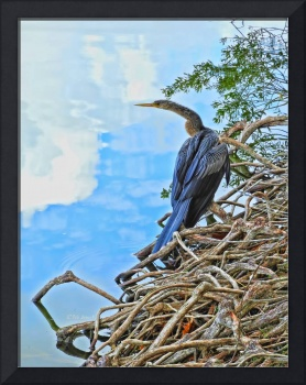 Anhinga in the Clouds