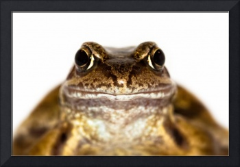 Portrait of the Common Frog