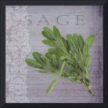Classic herbs series: Sage