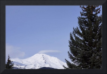 Shasta Mountain Art Prints Pine Tree Snow Blue Sky