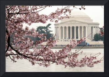Cherry Blossom Peak Bloom Washington DC no-21