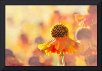 Sunlit Helenium Flowers with Texture Effect