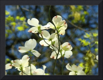 Floral Art Prints White Dogwood Flowers Trees
