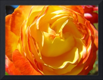 Rose Flower art print Orange Yellow Roses Center