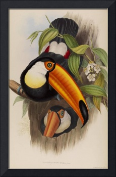 Henry Constantine Richter, John Gould~Toco Toucan,