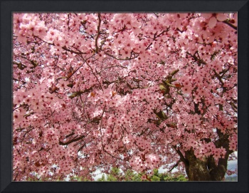 SPRING BLOSSOMS 18 Pink Tree Blossoms Art & Cards