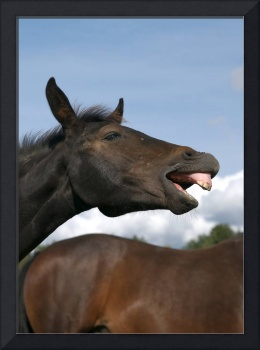 Foal laughing