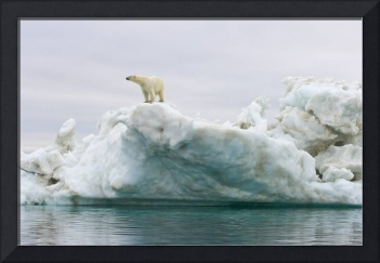 Polar bear standing atop an iceberg floating in th
