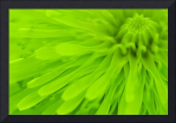 Bright Lime Green Wall Art
