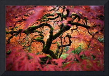 Moss Covered Autumn Tree