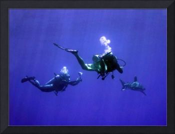 Photographing an Oceanic Whitetip