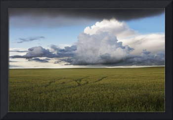 Storm Clouds Over A Grain Field, Central Alberta,