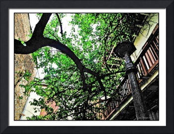 New Orleans Warped tree