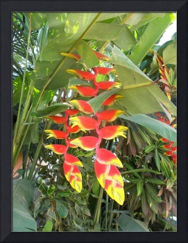 heliconia flower red yellow