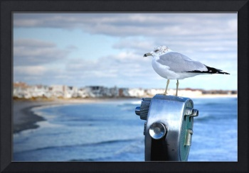 Seagull scans the coastline