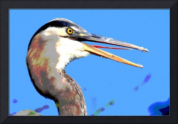 Heron Head Shot