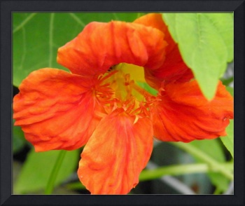 cool orange flower