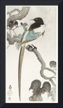 Magpie on Tree Branch by Ohara Koson