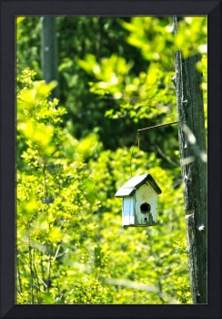 Birdhouse By The Bog