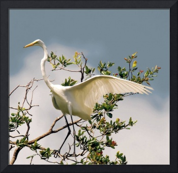 The Great Egret