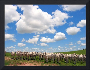 Cows & Clouds