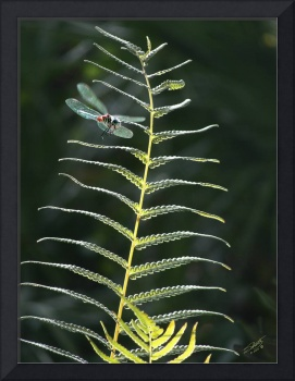 Dragonfly and Fern