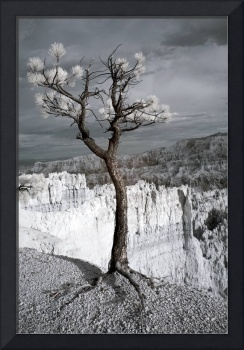 Lone Tree Canyon - Infrared Landscape