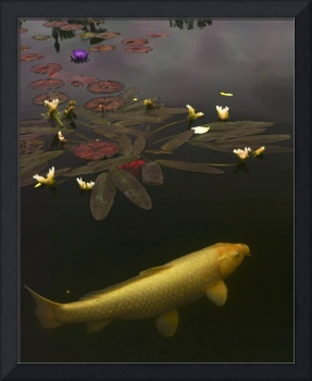 0212  Yellow Koi