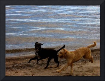 Dogs having fun at the beach