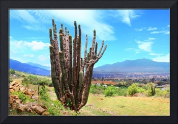 organ pipe cactus in Tlalixtac with Tlacolula Vall