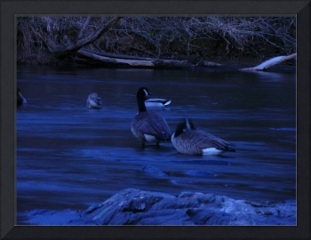 geese on a blue moon night