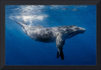 Humpback Whale Under Ocean Surface