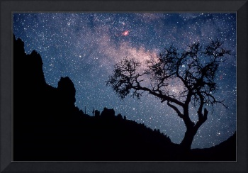 Milky Way & Tree