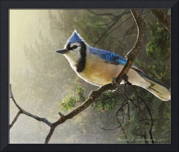 early bird blue jay
