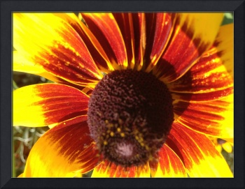 Red and orange and yellow flower