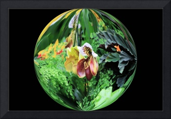 Slipper orchid in round bowl