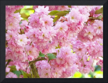 Spring Tree Blossoms Flowers art prints