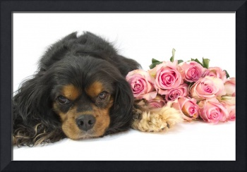 A Cavalier King Charles Spaniel With Pink Roses