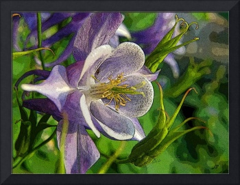 Mothers Day Columbine