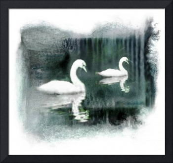 Swans semi-abstract