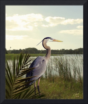 Great Blue Heron in the Bulrushes